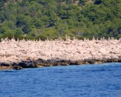 Horvātijas tuvplāni 2 - 2. foto