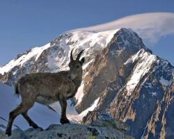 Alpi, Monblāns un citas virsotnes tā rajonā - 1. foto