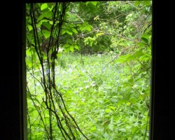 Jāņi. Ķeipenes pļavas - 3. foto