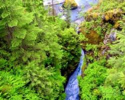 Lietus mežos - 3. foto