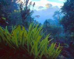 Lietus mežos - 1. foto