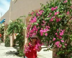 Ēģipte pavasarī - 2. foto