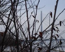 ainavas - 1. foto