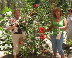 Hibiska ziedi Āfrikā