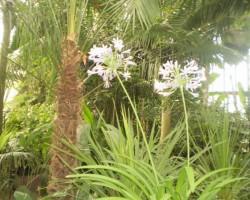 Botaniskais darzs - 3. foto