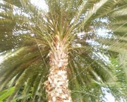 Botaniskais darzs - 1. foto