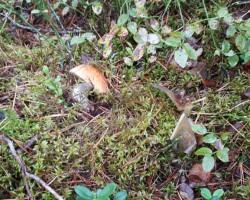 Nedaudz pastaigājos pa mežu - 2. foto