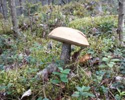 Nedaudz pastaigājos pa mežu - 1. foto