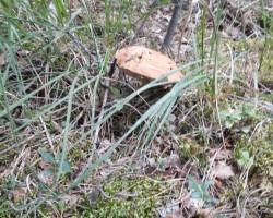 Nedaudz pastaigājos pa mežu - 3. foto