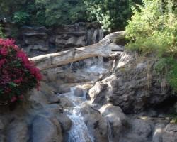 Tenerife,Loro parks - 2. foto