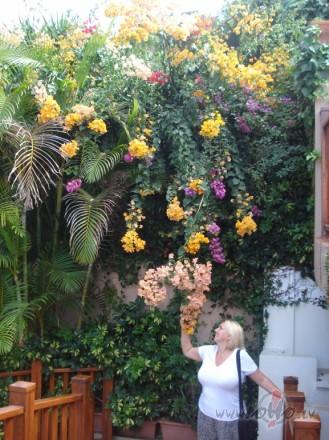 Tenerife,Loro parks