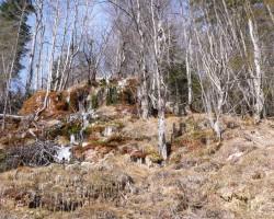 Meža taka (GSTAADe) - 2. foto