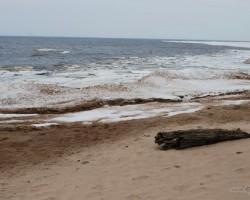Pavasaris jūras krastā - 2. foto