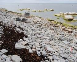 Igaunijas salas - 2. foto