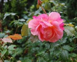 Augusts dārzā - 1. foto