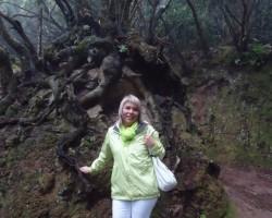 Anagas lietus mežos.