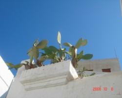 Grieķija....... Rodosas sala - 1. foto