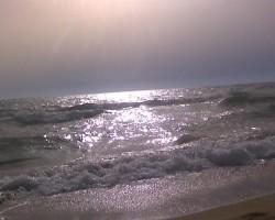 Kipras saulriets
