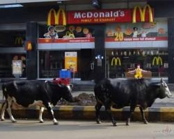 Indijas ikdienas ainiņas - 3. foto