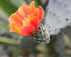 Botāniskajā dārzā - 3. foto