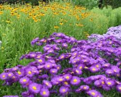 Botāniskajā dārzā
