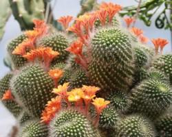 Botāniskajā dārzā - 1. foto