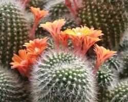 Botāniskajā dārzā - 2. foto