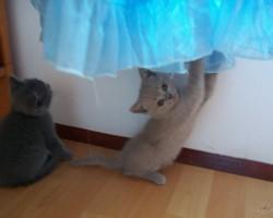 Kaķi. - 1. foto