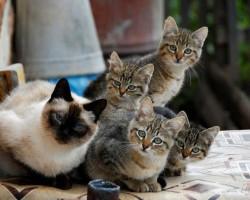 Kaķi. - 2. foto