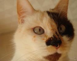 Kaķi. - 3. foto