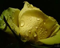 Pasaule zied...